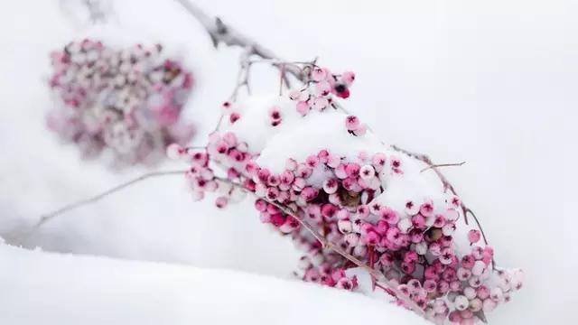 夜雪.jpg