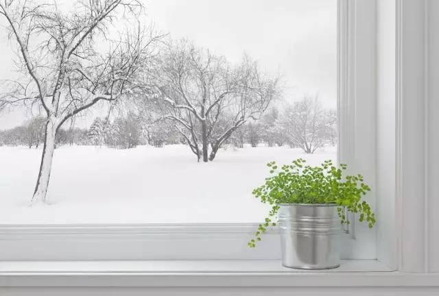 有雪.jpg