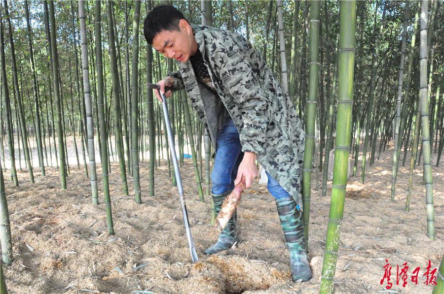挖竹笋.jpg