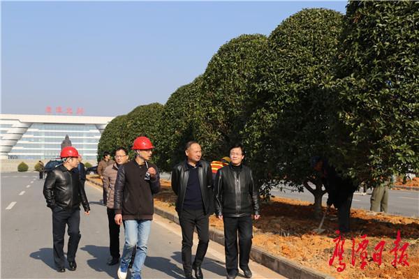 吴文戈视察指导信江北路绿化提升项目建设