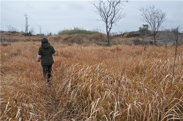 河岸附近都是近半人高的杂草 (1).JPG